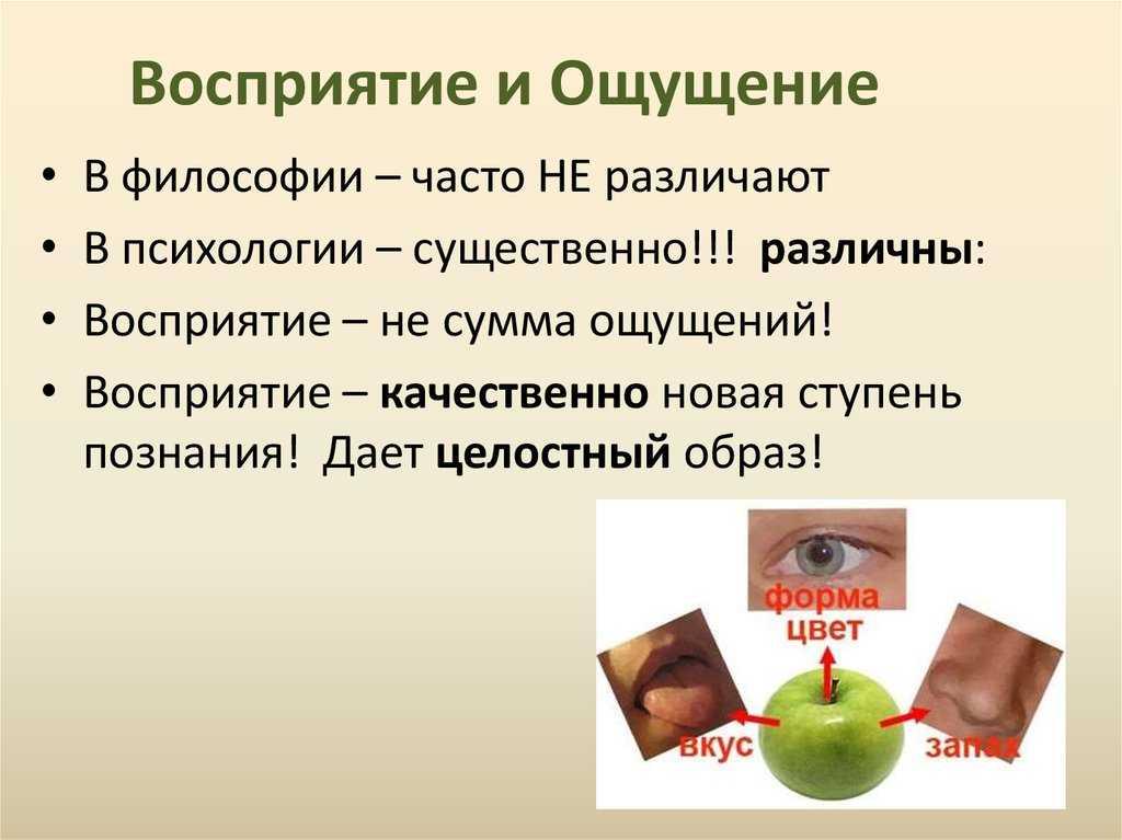 24.характеристика восприятия как познавательного процесса. виды восприятия